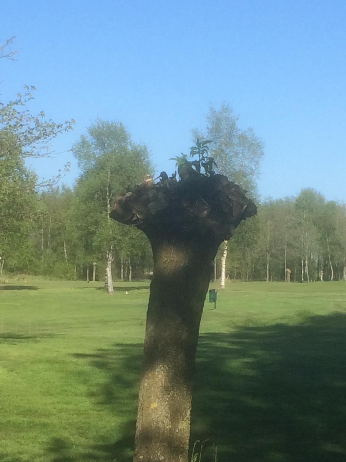 Hoog in een boom tussen hole 9 en de hole 5 van se par-3 baan.